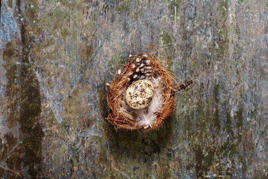Easter egg nest on rustic wooden background