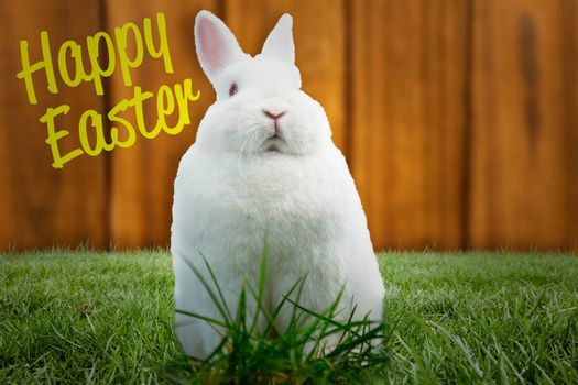 Composite image of fluffy bunny