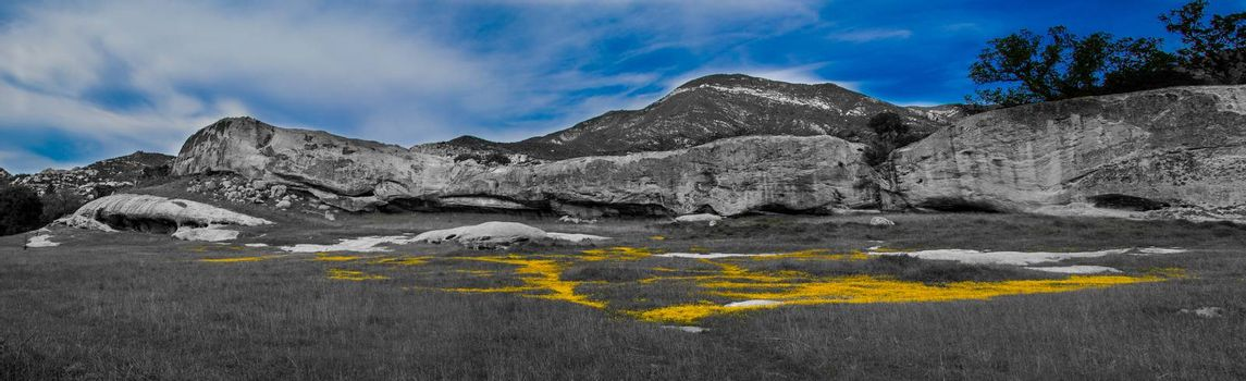 Yellow flowers in a meadow surrounded by rock cliffs.