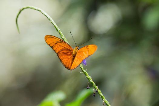 Butterfly on green stalk