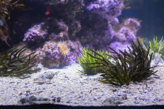 Lit up sea life in tank