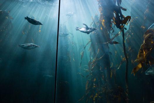 Fish swimming in a tank