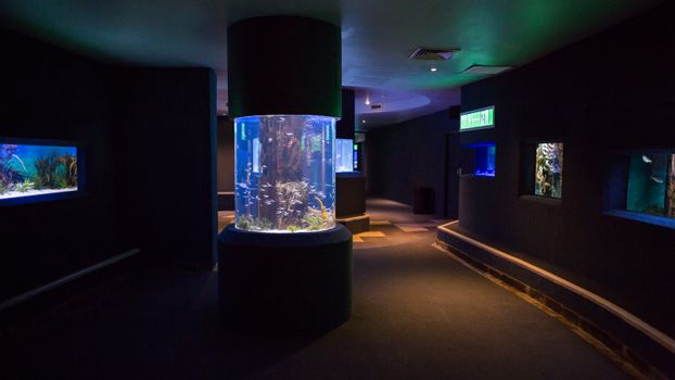 Lit up fish tanks