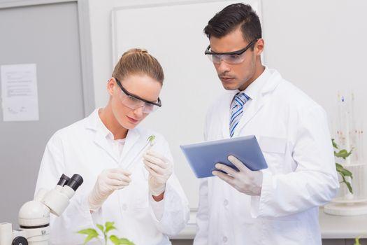 Scientists examining leaf of plants