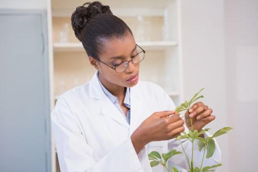 Scientist examining plant