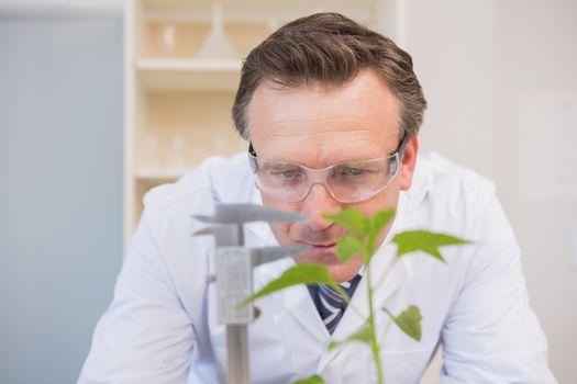 Scientist measuring plants