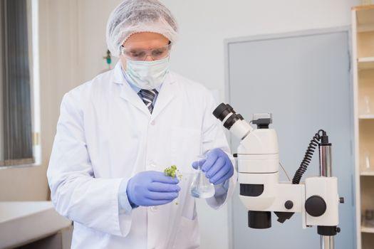 Scientist analysing plant