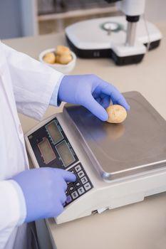 Scientist weighing potatoes