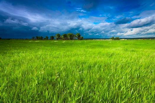 Meadow and stormy sky