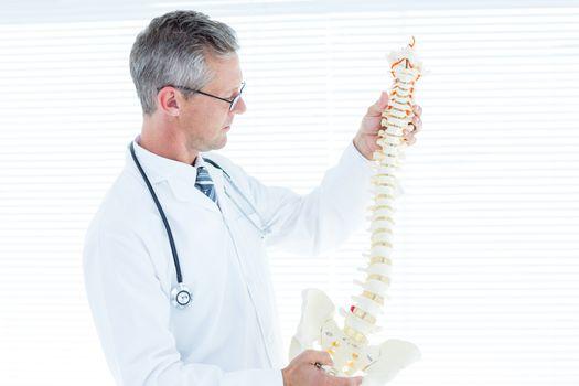 Doctor examining anatomical spine