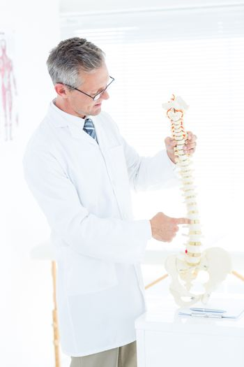 Doctor showing anatomical spine