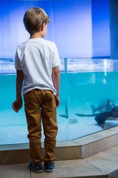 Young man looking at manta ray