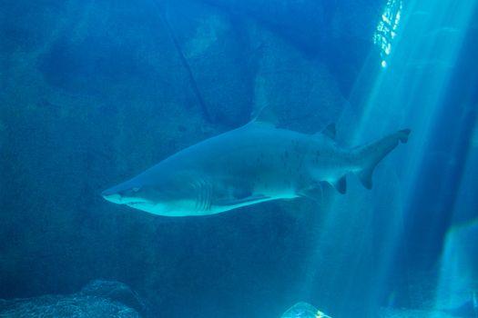 Shark swimming in an aquarium