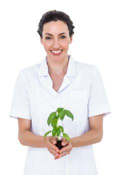 Scientist holding basil plant