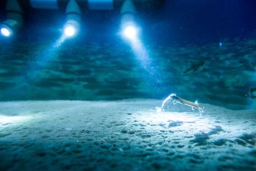 Spotlight focusing fish in a tank