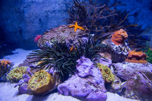 A starfish in a tank with stones