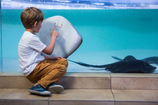 Young man pointing a manta ray