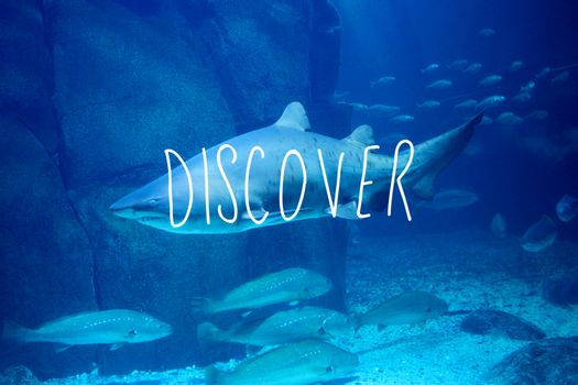 Composite image of discover