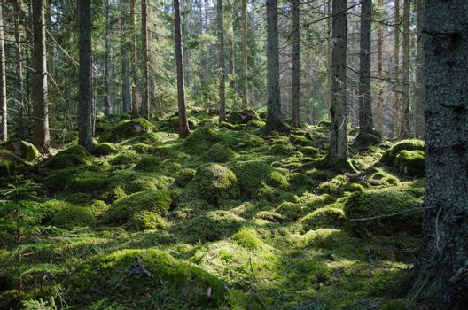 Mossy green forest