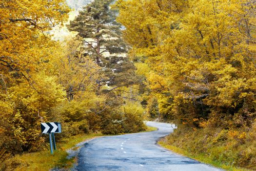 Winding Road to forest