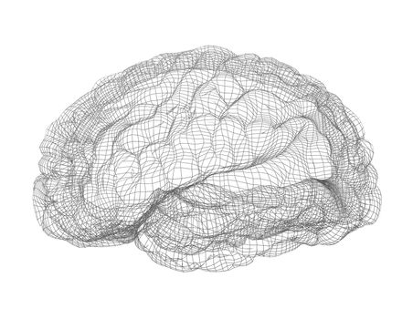 Wire-frame of human brain. Isolated on white background