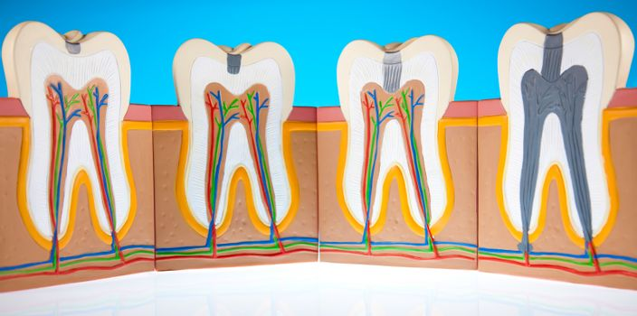 Human tooth structure, bright colorful tone concept