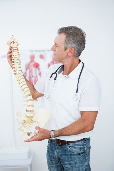 Doctor holding anatomical spine