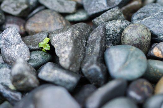 Small Plant Grows Through Big Rocks