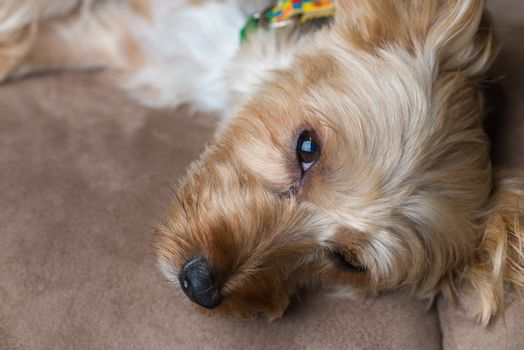 Adorable Dog with Collar