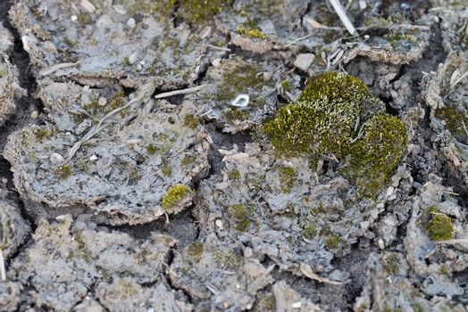 Cracked Mud with Moss