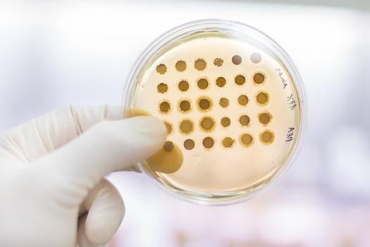 Fungi grown on agar plate.