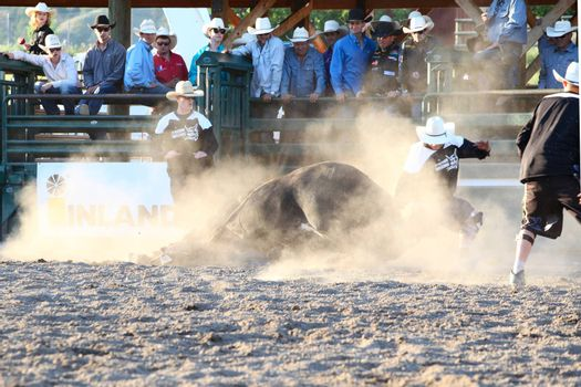 MERRITT, B.C. CANADA - May 30, 2015: Bull rider riding in the first round of The 3nd Annual Ty Pozzobon Invitational PBR Event.