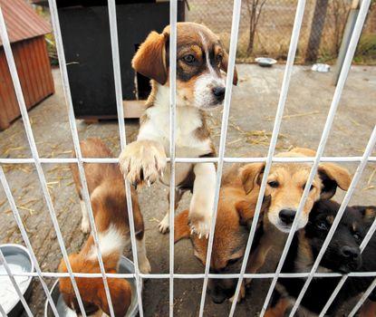 sad puppies shelter