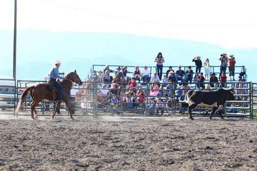 MERRITT, B.C. CANADA - May 30, 2015: Horseman roping bulls during The 3rd Annual Ty Pozzobon Invitational PBR Event.