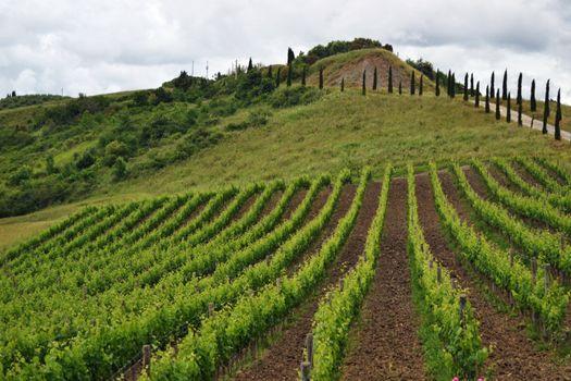 Toskansk vingård