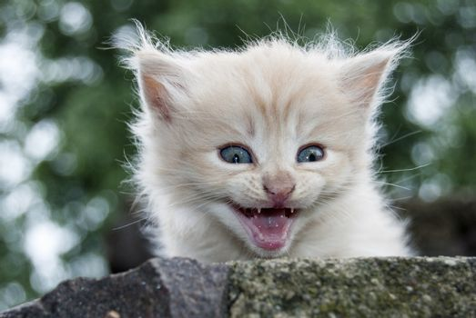 The little kitten in the author's treatment