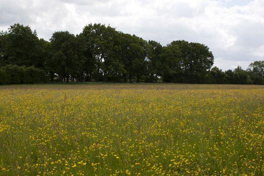 English Countryside, Holmer Green, Buckinghamshire