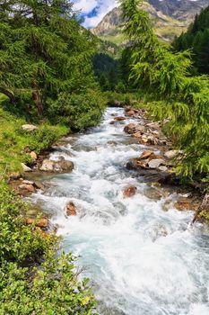 Mountain stream on summer