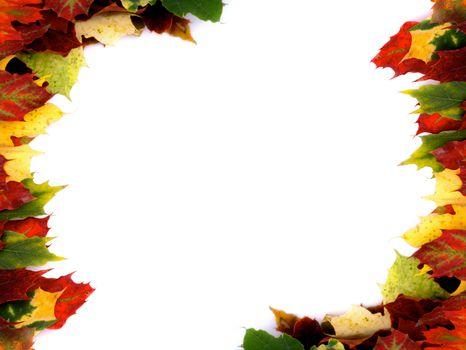 Borders of Maple Leaf