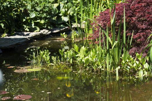 Decorative pond in a garden