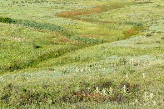 green prairie with wildflowers at Rocky Mountains foothills near Fort Collins, Colorado