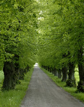 Avenue with trees.