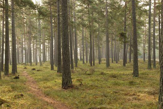 Redwood Forest (Ekerö, Sweden).