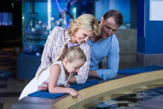 Happy family looking at manta ray