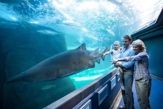 Family pointing a shark in a tank