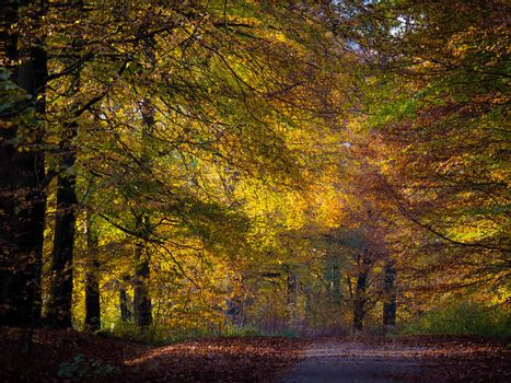 Colorful leaves in autumn forest