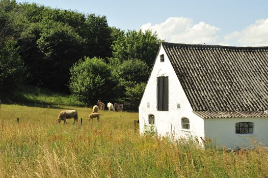 Cows in the pasture with a barn and silo in the background.