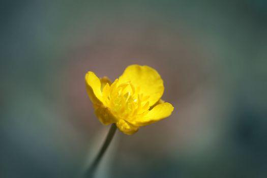 Yellow small flower