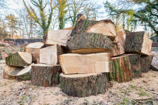 Big oak tree trunks sawn in parts