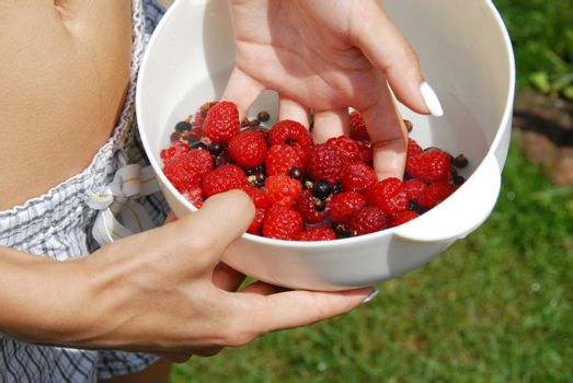 Holding raspberries and black currants in the hand